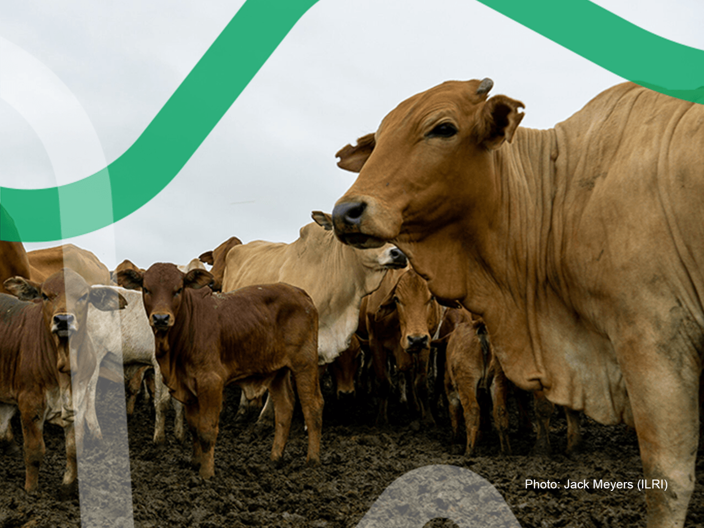 How can the Livestock Data Community Respond to COVID-19?