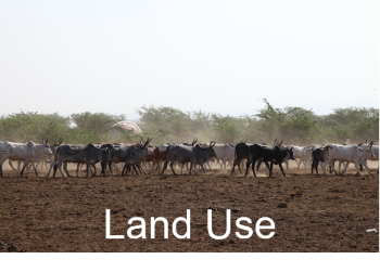 Cattle on arid land